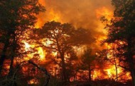 Пожарът край Изворище и Банево е потушен
