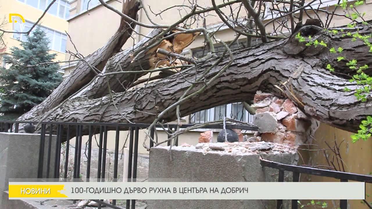 100-годишно дърво рухна върху хотел в Хисаря, евакуираха туристи