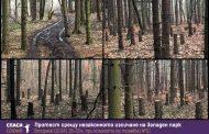 АЛАРМА! Безобразната сеч в Западния парк на София продължава