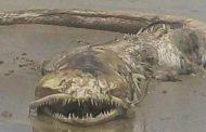Мистериозно чудовище бе изхвърлено на брега в Мексико