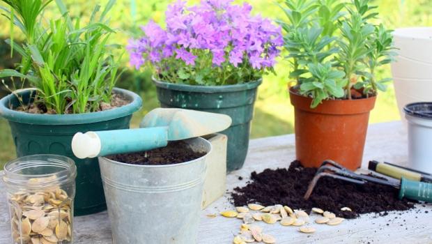 Най-лесните за отглеждане растения, които ще ви превърнат в добри градинари