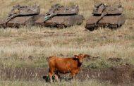 Най – известната крава в света щестава майка