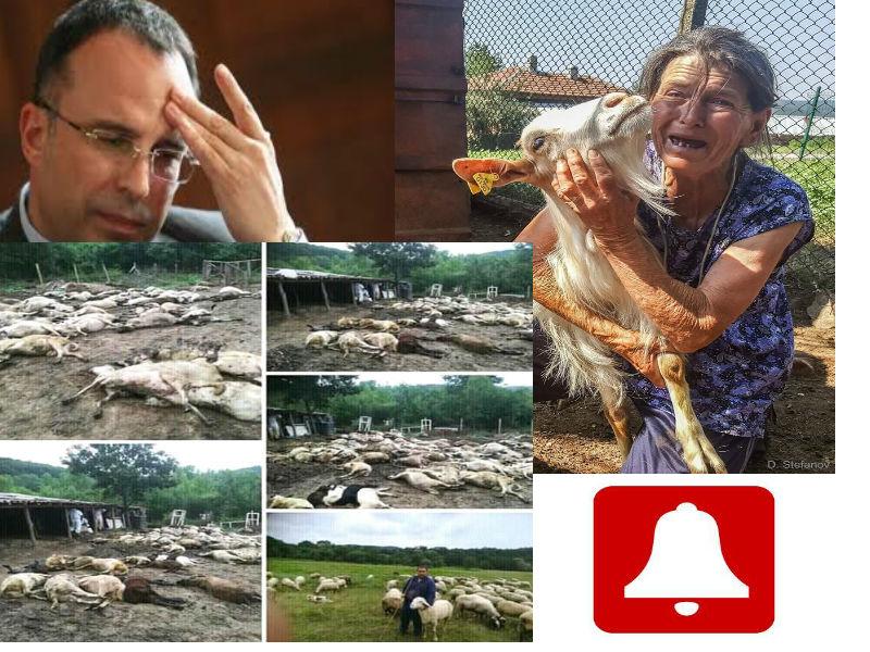 Министър Порожанов на земеделието! Защо мълчите?!  Обявете ден на траур!!