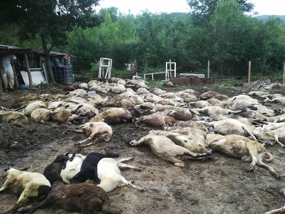 Турска фирма с участието на Бойко Борисов, стоят зад масовото изтребване на животните в Странджа…