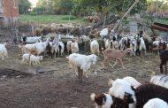 Можеше ли да се избегне евтанизирането на животни в Ямболско и Бургаско?