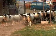 """Валентина Василева: Гръцките животновъди: """"Това, по този начин в Гърция не може да се случи. Вие се шегувате!"""""""