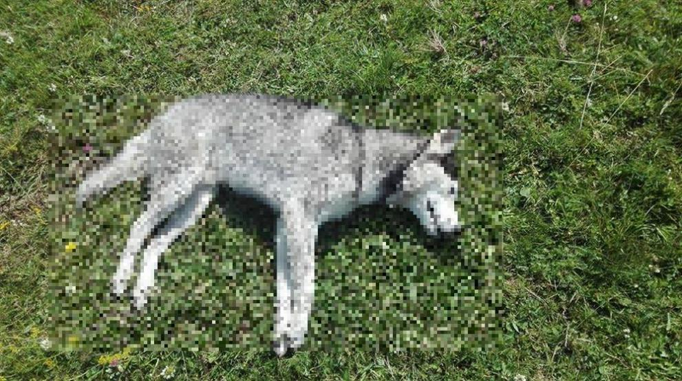 Сигнал за убити кучета вдигна накрак институциите