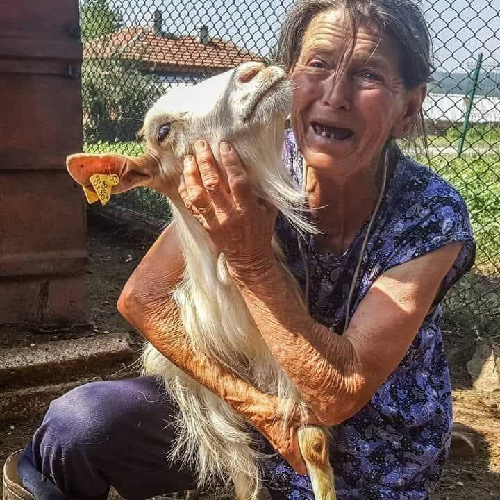 Това е баба Дора с една козичка от стадото й, което днес беше избито по заповед на социопата Дамян Илиев, носещ прозвището д-р Смърт