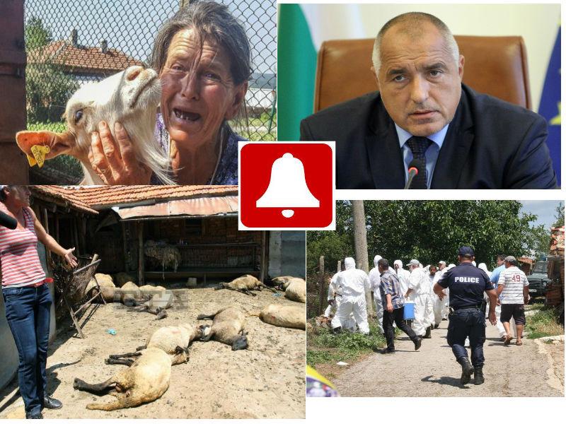 """Акция """"Пречупване"""" на Борисов не успя. Изби само козичките"""