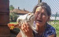 Заради чумата по овцете хора от Болярово осъдиха БАБХ в ямболския съд.