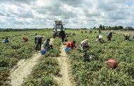 Цигани заплашиха с гладна смърт земеделец
