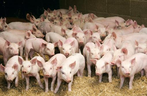 Oбират ни, избиват ни като свине