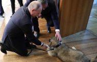 Григор Лилов: При посещението на руският президент Путин в Русия сръбският Александър Вучич му подари овчарско куче – местна порода, на име Паша.