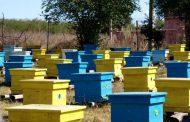 Пчелари на бунт заради пръскането за комари: Унищожиха ни пчелите.
