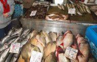 Внимавайте с консумацията на риба в България! Дебне опасност!
