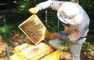Пчеларите се вдигнаха на бунт. Внасят петиция в ЕС!