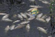 Замърсяването на река Марица край Пазарджик е преустановено