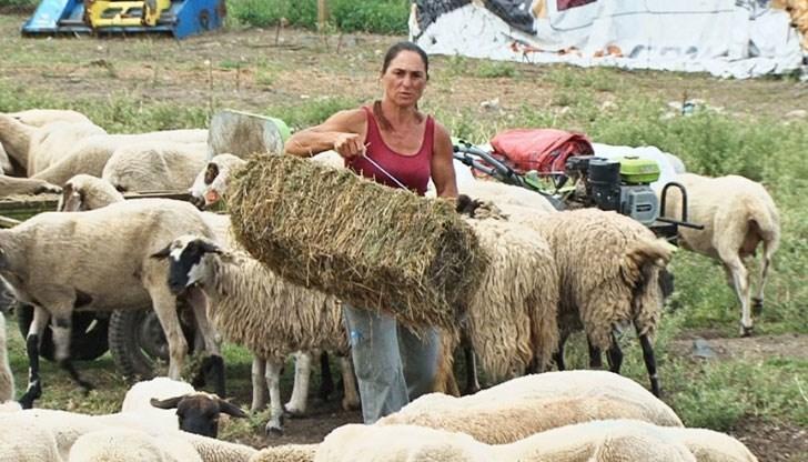 Фермерката Ани от Странджа спечели делото в съда: Чума не е доказана!