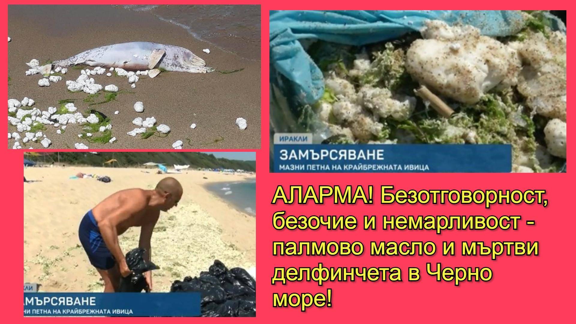 Незаконно изхвърляне палмово масло в Черно море и мъртви делфинчета. Кога властта ще излезе от ваканция?