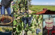 Борисов реши, че трябва да накаже и винарска изба, чийто работници са участвали на протестите срещу него.