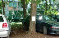 Депутатка от ГЕРБ иска паркомясто вместо дърво